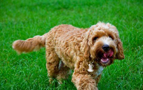 You Should Park Your Dog at the Dog Parker